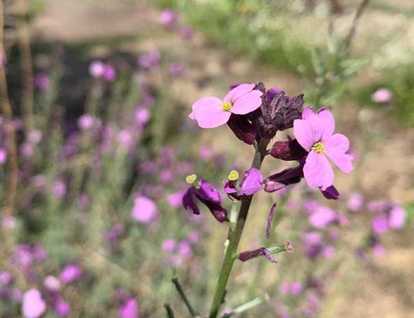 flower-605x465